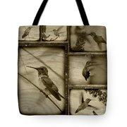 Hummingbird Family Portraits Tote Bag
