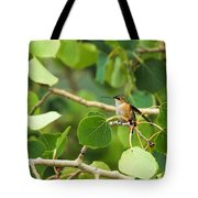 Hummingbird In Tree Tote Bag