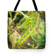 Hummingbird Moth Caterpillar Tote Bag