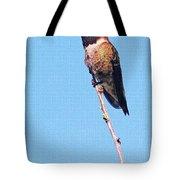 Hummingbird On Acacia Bush Twig Tote Bag