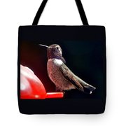 Hummingbird Posing On Perch Tote Bag