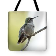 Hummingbird Sitting On A Branch Tote Bag