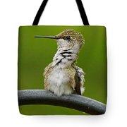 Hummingbird Stretching  Tote Bag