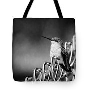 Hummy On Fence B And W Tote Bag