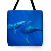 Humpback Whale Males Interacting Maui Tote Bag