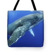 Humpback Whale Near Surface Tote Bag