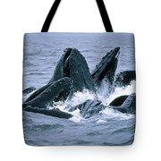 Humpback Whales Gulp Feeding On Herring Tote Bag
