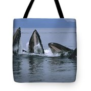 Humpback Whales Gulp Feeding Southeast Tote Bag