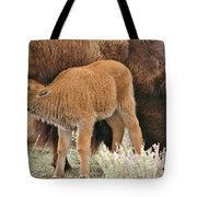 Hungry Baby Bison Tote Bag
