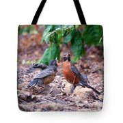 Hungry Baby Robin Tote Bag