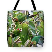 Hungry Chiriqui Conures Tote Bag