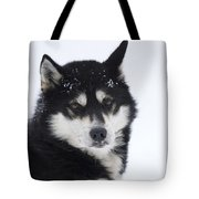 Husky Dog Breading Centre Tote Bag by Lilach Weiss