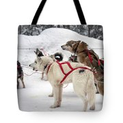 Husky Dogs Pull A Sledge  Tote Bag