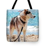 Husky On The Beach Tote Bag