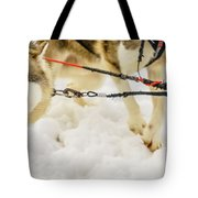 Husky Sled Dogs, Lapland, Finland Tote Bag