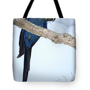 Hyacinth Macaw Anodorhynchus Tote Bag