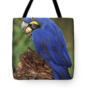 Hyacinth Macaw Eating Piassava Palm Nuts Tote Bag