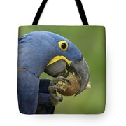 Hyacinth Macaw Habitat Eating Piassava Tote Bag