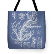 Hyalosiphonia Caespitosa Okamura Tote Bag by Aged Pixel