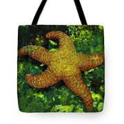 I Found A Starfish Tote Bag