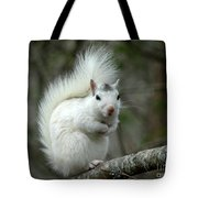 I Know I'm Cute Tote Bag