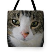 I See You Cat - Square Tote Bag