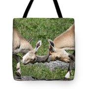 Ibex Doing Battle Tote Bag