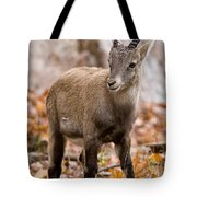 Ibex Pictures 10 Tote Bag