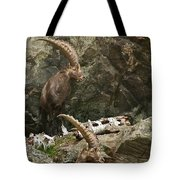 Ibex Pictures 112 Tote Bag