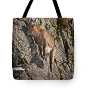 Ibex Pictures 151 Tote Bag