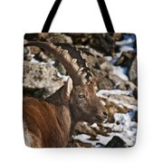 Ibex Pictures 160 Tote Bag
