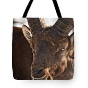 Ibex Pictures 169 Tote Bag
