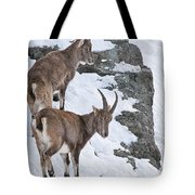 Ibex Pictures 171 Tote Bag