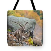 Ibex Pictures 174 Tote Bag