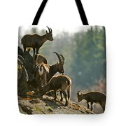 Ibex Pictures 176 Tote Bag
