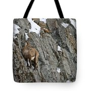Ibex Pictures 183 Tote Bag