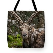 Ibex Pictures 190 Tote Bag