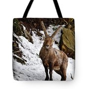 Ibex Pictures 22 Tote Bag