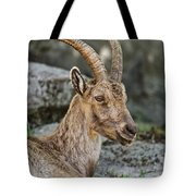 Ibex Pictures 38 Tote Bag