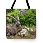 Ibex Pictures 64 Tote Bag