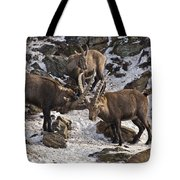 Ibex Pictures 83 Tote Bag
