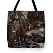 Ibex Pictures 86 Tote Bag
