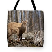 Ibex Pictures 92 Tote Bag