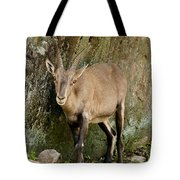 Ibex Pictures 115 Tote Bag