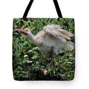 Ibis 12 Tote Bag