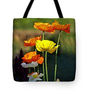 Iceland Poppies In The Sun Tote Bag