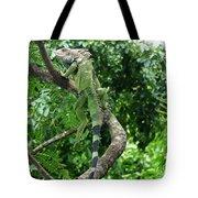 Iguana In A Tree Tote Bag