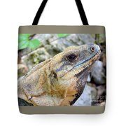 Iguana Of The Uxmal Pyramids In Yucatan Mexico Tote Bag