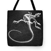 Iguana Skeleton In Silver On Black  Tote Bag