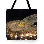 Illuminated Bread Tote Bag
